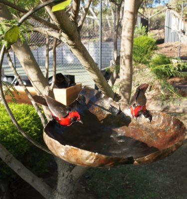 Handcrafted metal bird feeder
