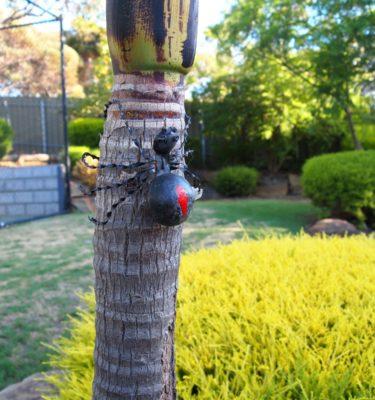 Redback Spider metal garden art